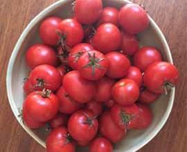 My Own Tomato Festival